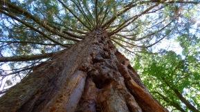 Beautiful Big Tree