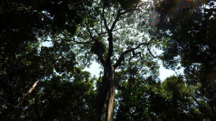 Iluka Forest Canopy - Iluka Nature Reserve