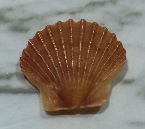 Little Shell