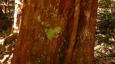 Mossy Heart - Iluka Nature Reserve