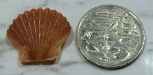Shell and Coin