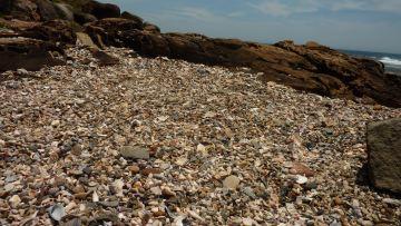 Shell Graveyard - Iluka Bluff