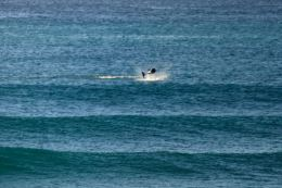 Dolphins - Splashing1