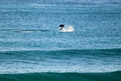 Dolphins - Splashing3