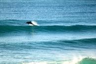 Dolphins - Splashing4