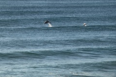 Dolphins - Splashing6