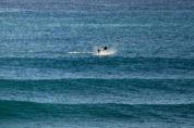 Dolphins - Splashing7