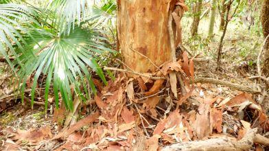 Bark fallen from tree