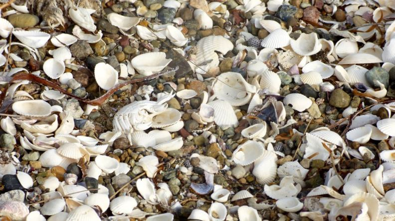 Bleached shells and crab.
