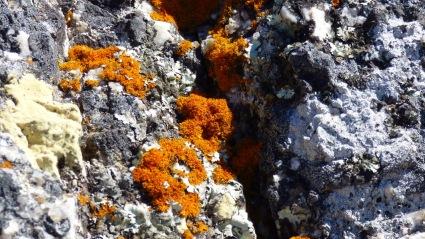 Lichen close up