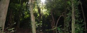 Aussie Rainforest