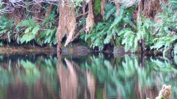 Reflection behind the weir