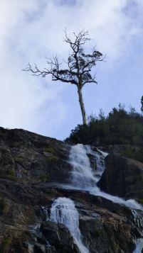 The lone tree at the top of the falls