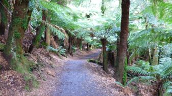 PAthway leading under the canopy
