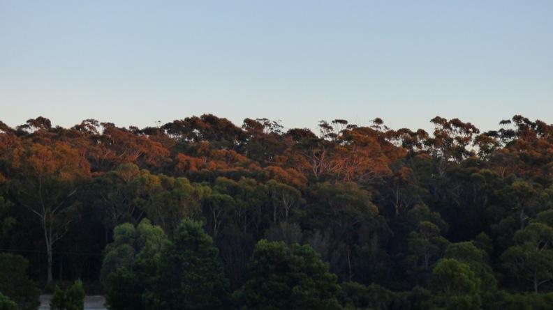 Sunlight on the Trees