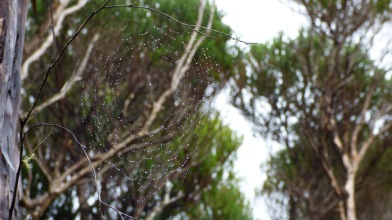 Water jewels on a delicate spider web. (Finding something of beauty amid the sadness of the ruins on Sarah Island)