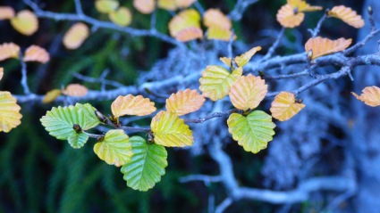 Another shot of The Fagus.