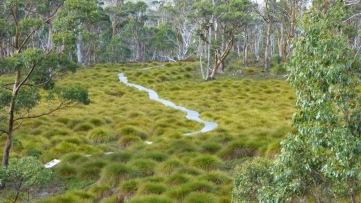 Across the Buttongrass moors.