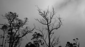 Cold grey skies.