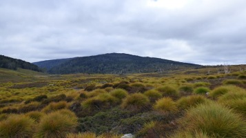 Turning left on the Overland Track.