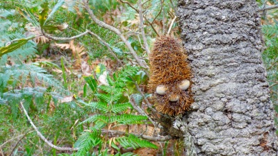 Fuzzy 'Muppet' on a tree