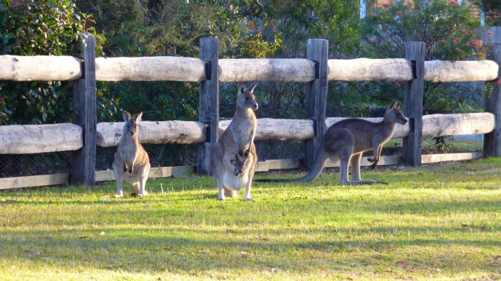 The Kangaroo Family