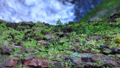 Growth on a fallen tree
