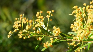 Dying blooms, golden in colour