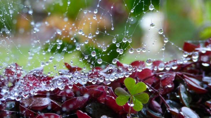 Raindrops and Shamrocks