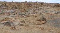 Such a barren landscape