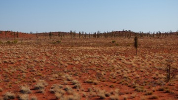 The sand dunes leaving Yulara.