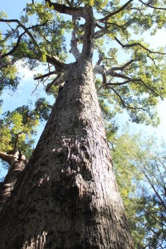 Tall trunk