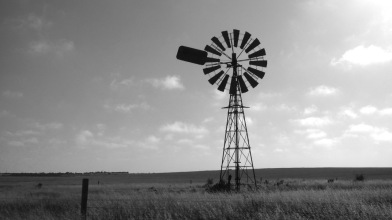 A windmill in a wheat field at Penong.