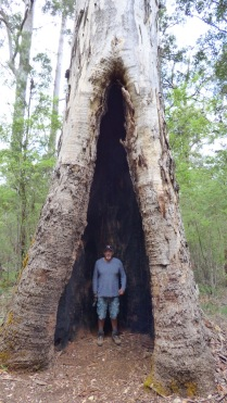 Dean inside a karri hollow