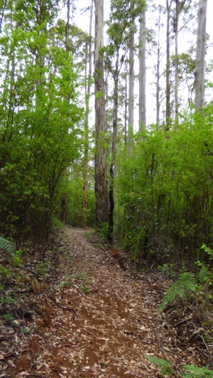 The track towards One Tree Bridge