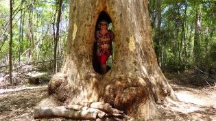 Me inside the Walk Through Karri Tree