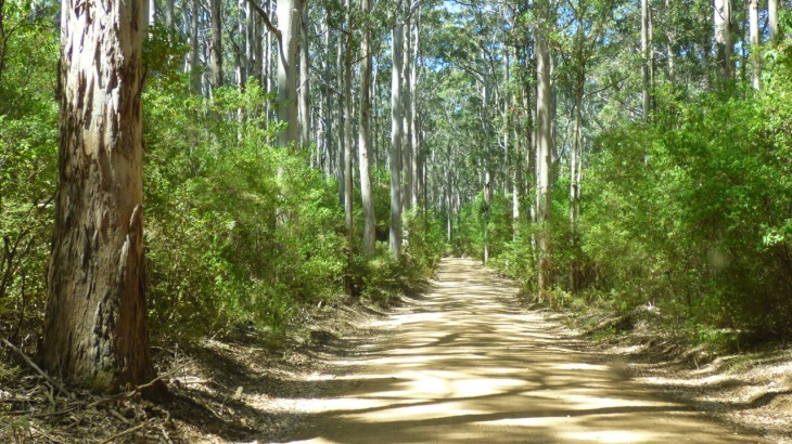 Boranup Road through Boranup Forest