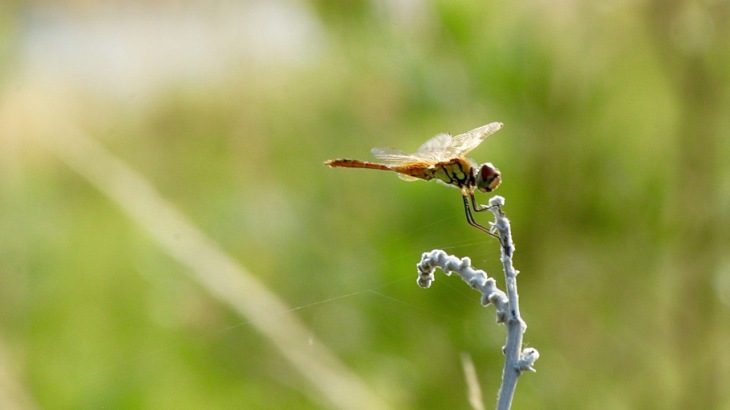 Beautiful Dragonfly that Dean photographed