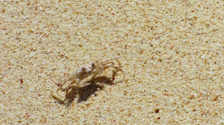 Sand Crab at Turquoise Bay