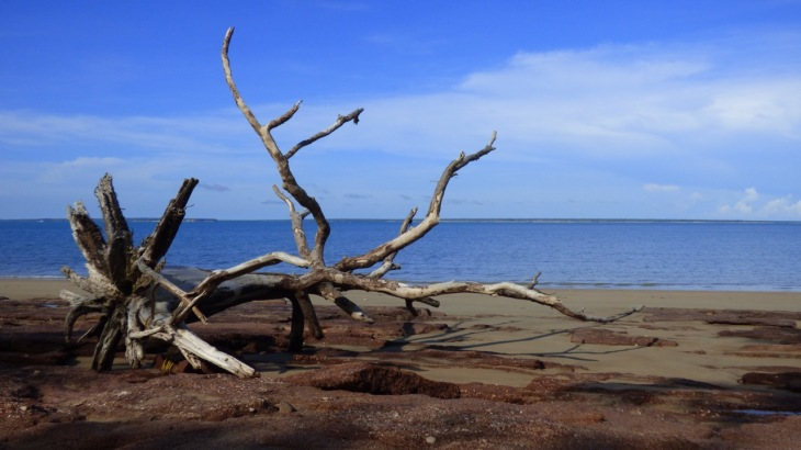 dead tree photographed on a beach