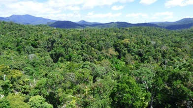 The rainforest below