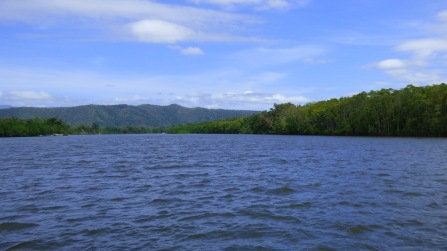 The Daintree River
