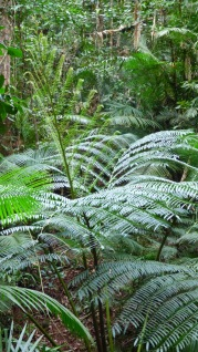 A King fern - these were really huge
