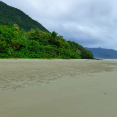 Where the rainforest meets the sea