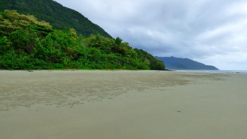 Where the rainforest meets the sea