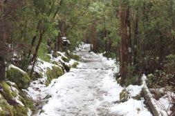 Frozen Bushwalk - Tasmania
