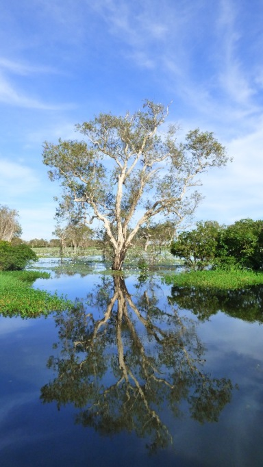 Just a tree- Yellow Water Billabong - Northern Territory