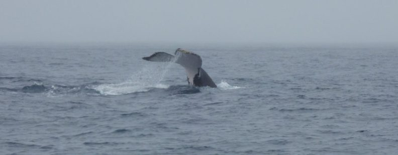 Whale Watching Clares Cosmos