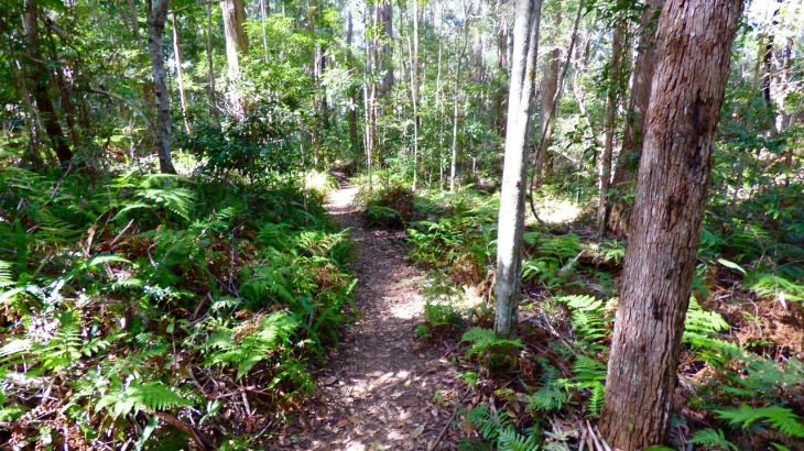 Walking track up to the Baroon Pocket Dam lookout.