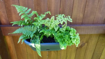 Just some little ferns